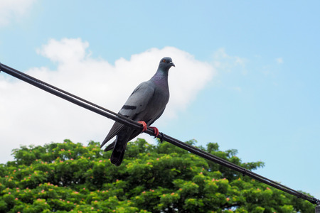 power nap: pigeons on a wire Stock Photo