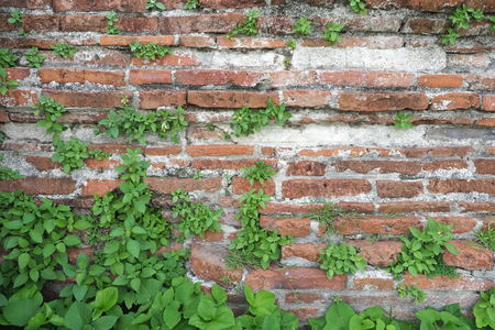 mottle: brick wall and leaf