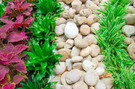 stone and grass for decorate the garden photo