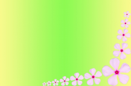 Pink periwinkle flower background for your purpose desing photo