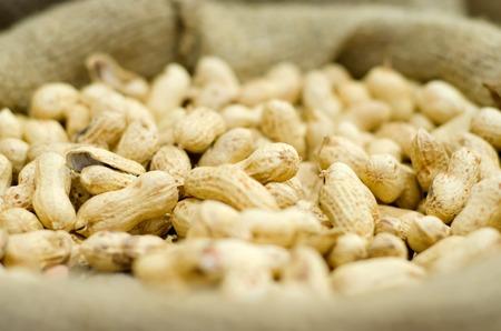 groundnut: Peanut in fabric sack, dry groundnut