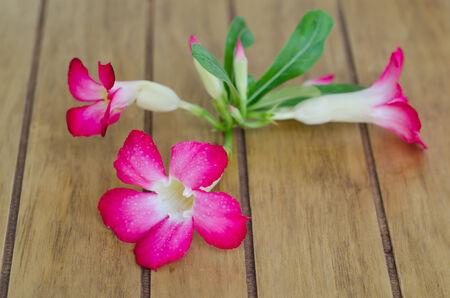 Desert Rose on wood table photo