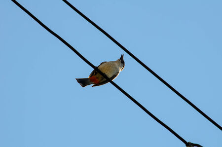 electric line: Bird still on electric line against blue sky background