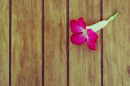 Desert Rose on retro wood table photo