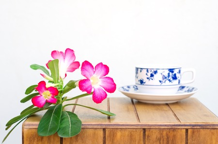 coffe cup: Coffe cup and Desert Rose on wood table