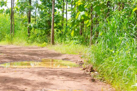 road and path through: Trees in forest, nature green wood and the road with trough flooding Stock Photo