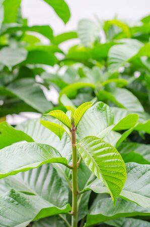 arbol de problemas: Primer plano de las hojas de las plantas verdes pico