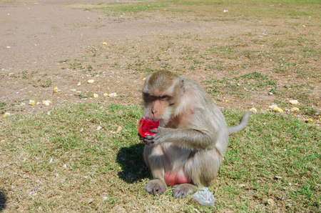 Monkey still with a food outdoor Stock Photo