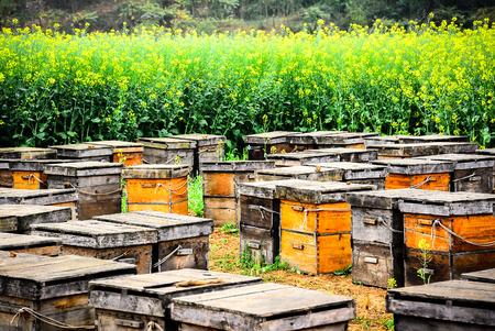 abejas panal: Las cajas de madera son inserte Las abejas dentro en vez de nido de abeja. Las abejas se alimentan de miel pura. Foto de archivo