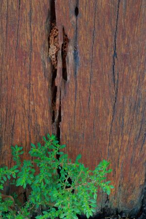 not full: Wood texture background with decorative grass  Stock Photo