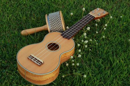 Ukulele and Cabasa Stock Photo - 16732627