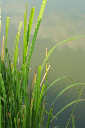 Grass near the lake Stock Photo - 16715031