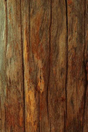 Old tree texture