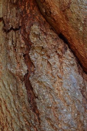 not full: Wood background