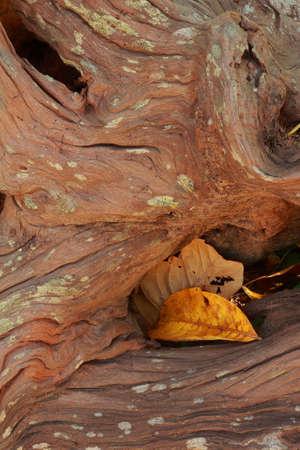 Tree background  Stock Photo - 16992332