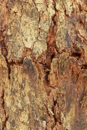 not full: Tree background  Stock Photo