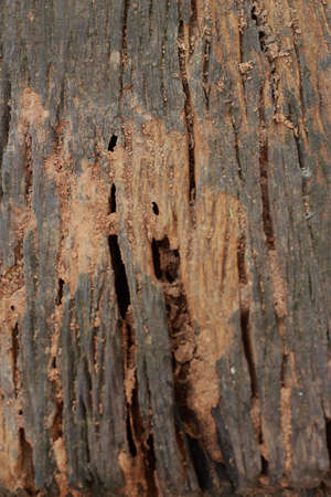 not full: Old wood background