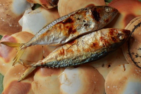 Mackerel on the shell  photo