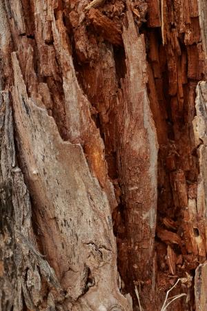 not full: Bark background