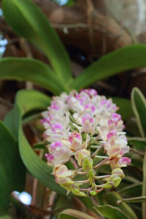 Pink and white orchid  photo