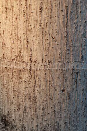 not full:  Tree background