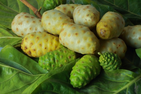Noni fruit Thailand