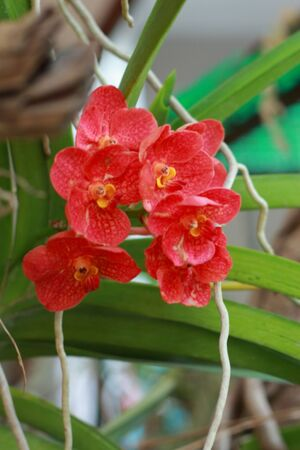 Orchid red Stock Photo