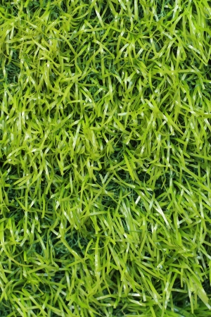Plastic grass background photo