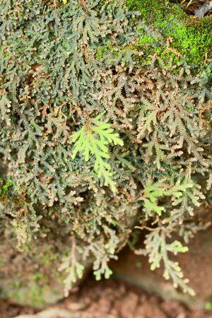 fern  large fern: Fern on the stone