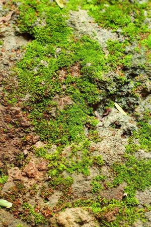 Moss on the ground. photo