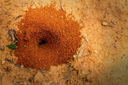 Ants nest with green grass  photo