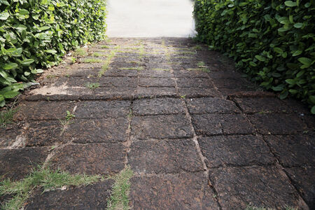 hardscape: Bricks on the walkway