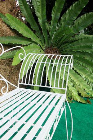 fern  large fern: Large green ferns