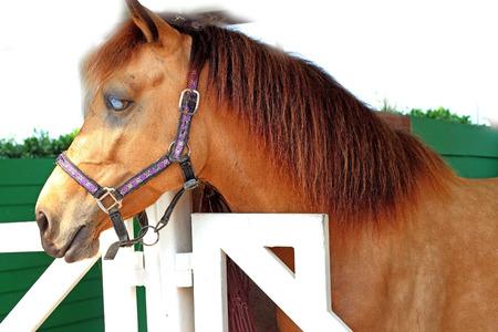 Horses on a farm photo