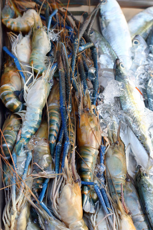 Fresh shrimp  in the market
