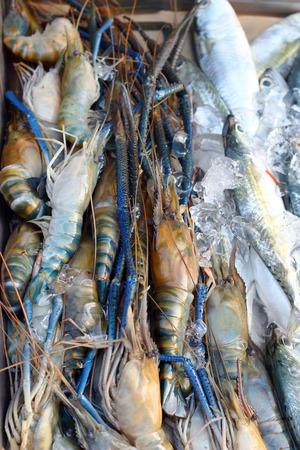 Fresh shrimp  in the market