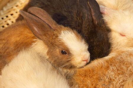 sold small: Coniglio piccolo lotto venduto al mercato