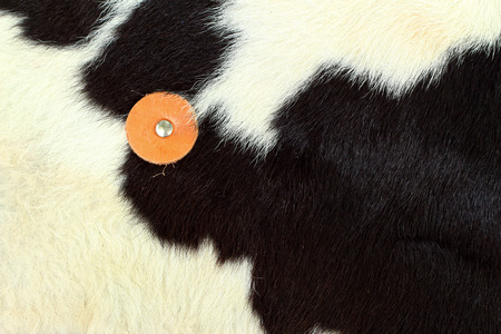 white and black background cow fur