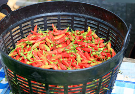 Fresh red chilli in a basket photo