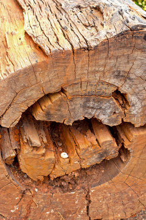 stumped: Tree stump in the nature