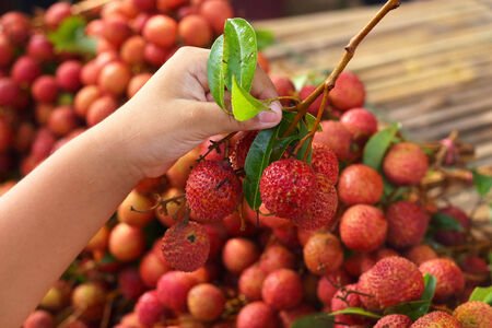 litschi: Close up a lot of lychee