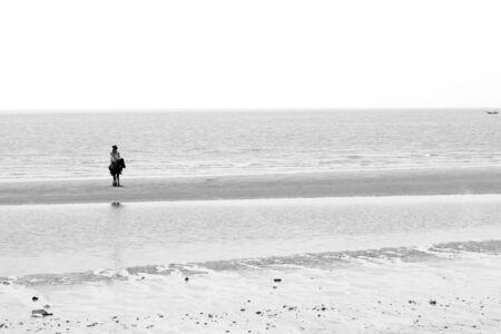 Horses on the beach photo