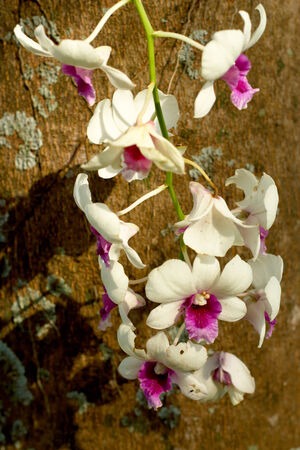 White orchids in nature Stock Photo