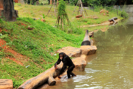 Monkeys in the nature