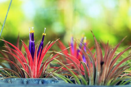descriptive colours: close up cactus