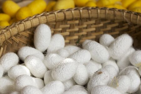 cocoon: cocoon silkworm Stock Photo
