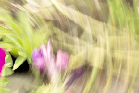 golden  gleam: blurred flowers light trails background
