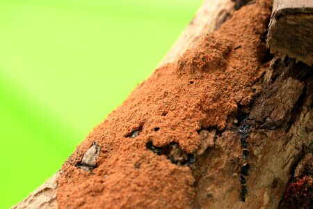 Termite on tree Stock Photo