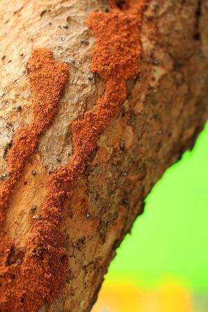 not full: Termite on tree Stock Photo