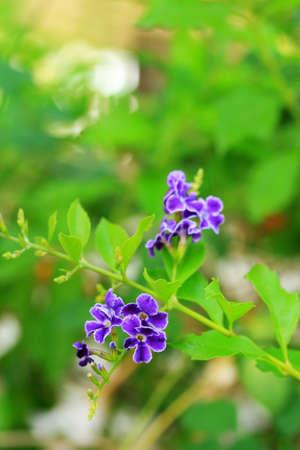 descriptive colours: Purple flowers